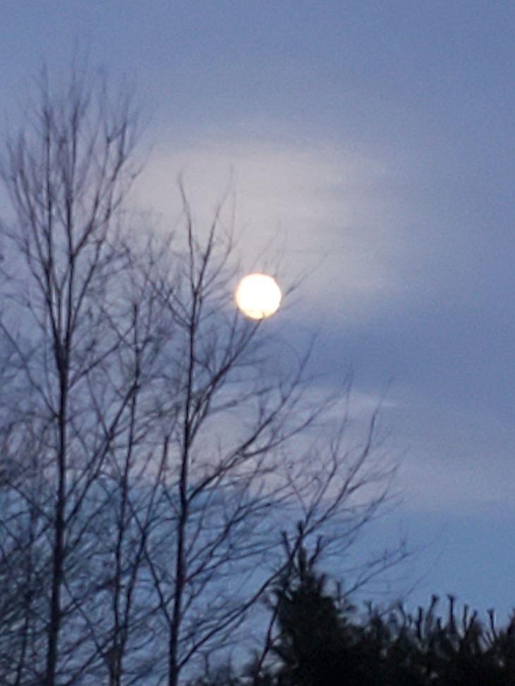 Full moon and bare branches
