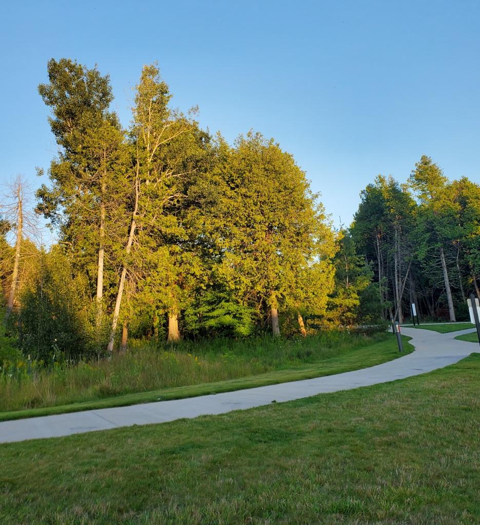 Trees, grass, paved path, blue sky